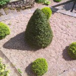 Formal Bushes