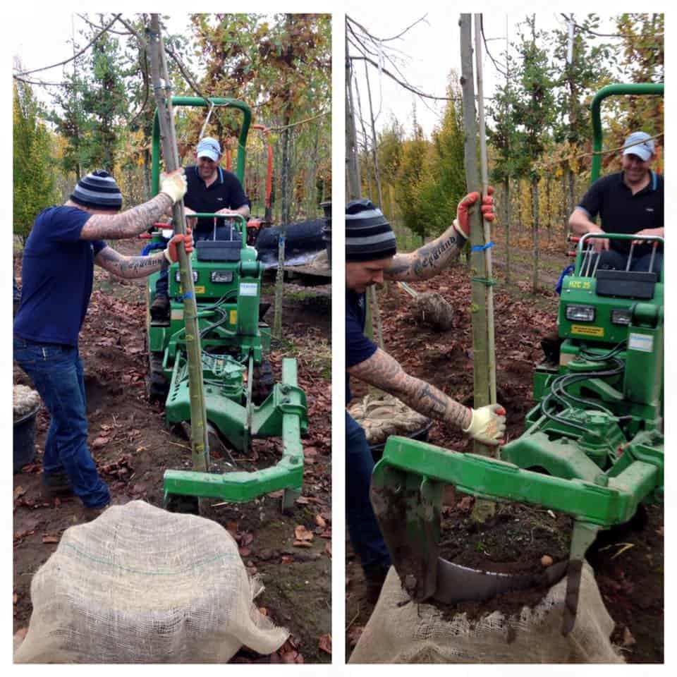 tree lifting