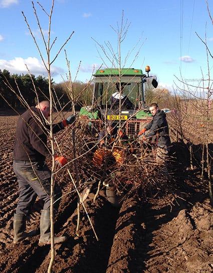 Tree Planting - Securing