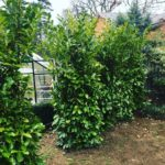 Hedging & Privacy