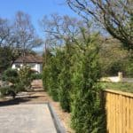 Perfect trees for screening & Privacy