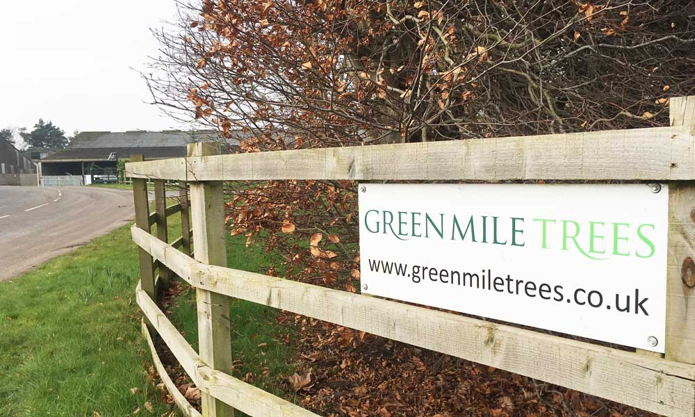 Green Mile Trees Entrance